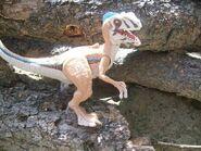Raptor2009toy
