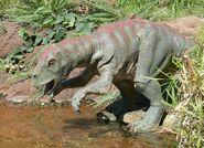 Psittacosaurus 6546465