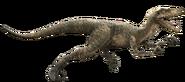 Velociraptor-detail-header