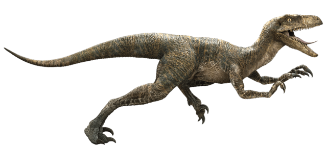 Datei:Velociraptor-detail-header.png
