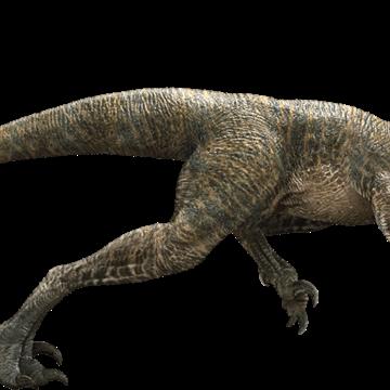 Velociraptor Movie Canon Jurassic Park Wiki Fandom