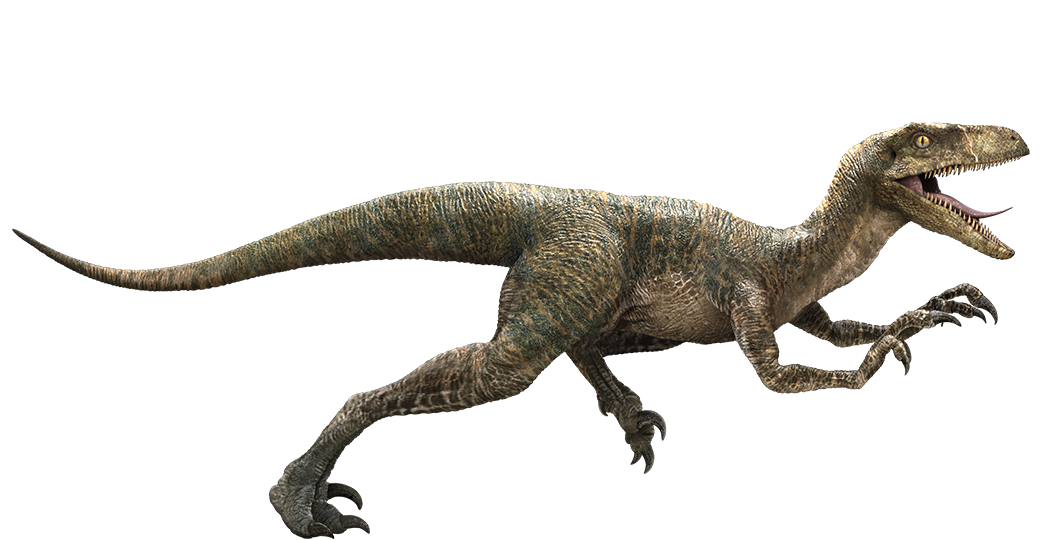 Velociraptor wikia jurassic park fandom powered by wikia - Dinosaure jurassic world ...