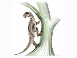 HeterodontosaurJPI