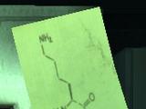 Lysine contingency