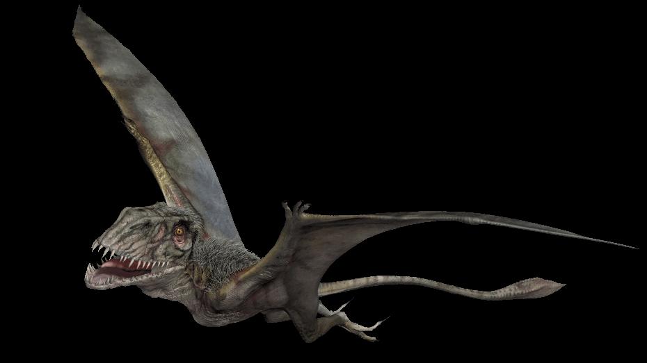 Dimorphodon jurassic park wiki fandom powered by wikia - Dinosaure marin carnivore ...