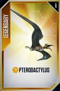 Pterodactylus Card