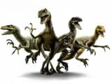 Jurassic World Velociraptor Pack