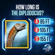 Diplodocus Size Quiz