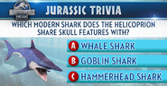 Helicoprion Trivia