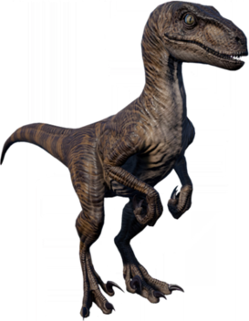 RaptorJPthumb