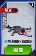 Metriorhynchus3