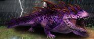 Salamander 16