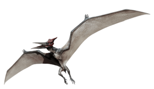 Pteranodon | Jurassic Park wiki | FANDOM powered by Wikia