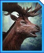 Megaloceros profile