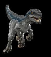Raptorccrender