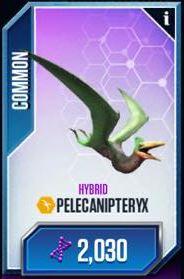 File:Pelicanipteryx.jpg