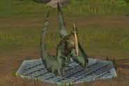 Pterodactylus (29)
