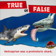 Helicoprion true or false