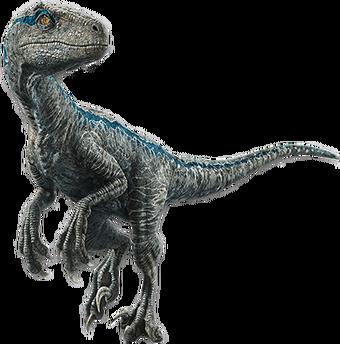 Velociraptor | Jurassic Park Wiki | Fandom