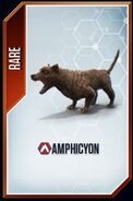 Amphicyon card