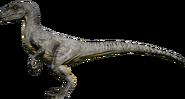 RaptorAlpine