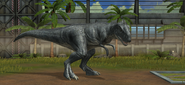 Jurassic World Majungasaurus (13)