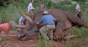 Triceratops krank