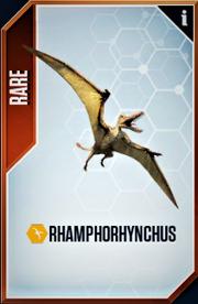 Rhamphorhynchus Card