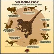 500x500 raptor poster