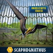 Scaphognathus JW Promo