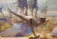 Dracorex 1