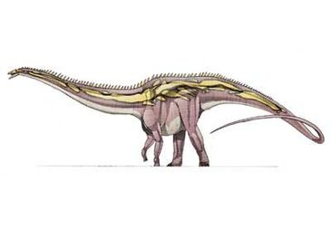Dc card cetiosauriscus big