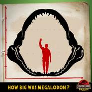 JPB Megalodon quiz 1