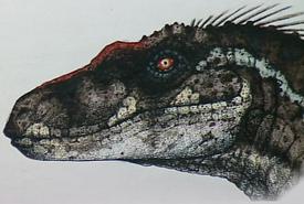 Raptor male art
