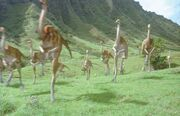 Gallimimus-herd
