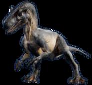 JWFK Allosaurus