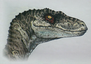 Raptor female art
