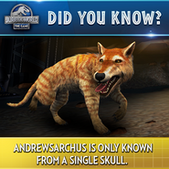 Andrewsarchus Trivia