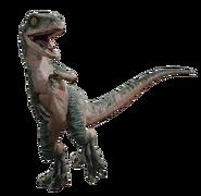 Raptor Dd6x2f9-81ba3c9a-508a-41f9-830e-1fc1f47d4ea8