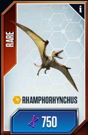 Rhamphorhynchus-1