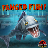 Fanged Fish!