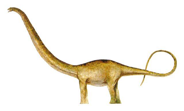 File:Mamenchisaurus 2.jpg
