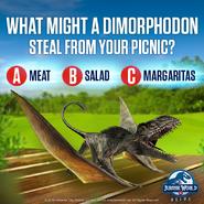 Dimorphodon x Margaritas