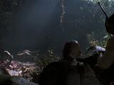 Tyrannosaurus rex nest