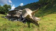 Triceratops skelton fallen kingdom