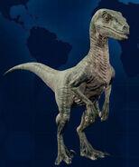 VelociraptorMain