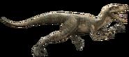 Echo Velociraptor-detail-header