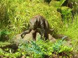JP psittacosaurus