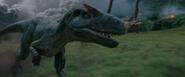 Wild Allosaurus Closeup