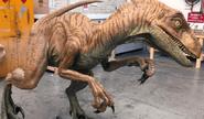 Raptor Taxidermedraptormodel